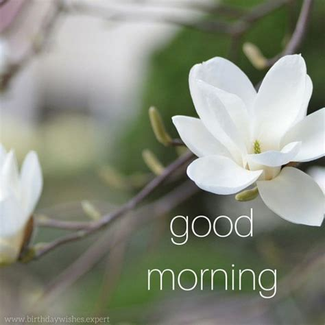 new themes good morning 604 best good morning images on pinterest