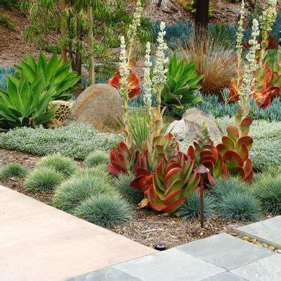 backyard cactus garden 31 best images about cactus landscape on pinterest best