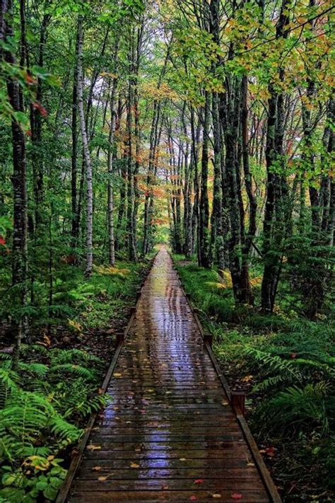 Gardens Of Acadia by 1000 Images About S Paths On