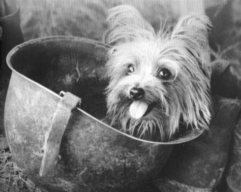 smokey the yorkie army mascots of decades past 16 vintage photos