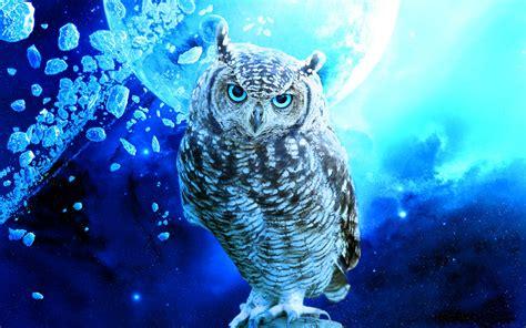 Piyama Owl Blue Piyama Owl owl by xxherculexx on deviantart