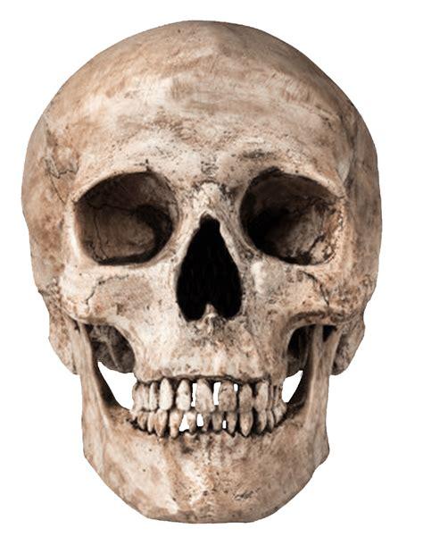 Human Skull Transparent Png Stickpng Skull On