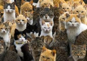 cat island in japan japan s cat island