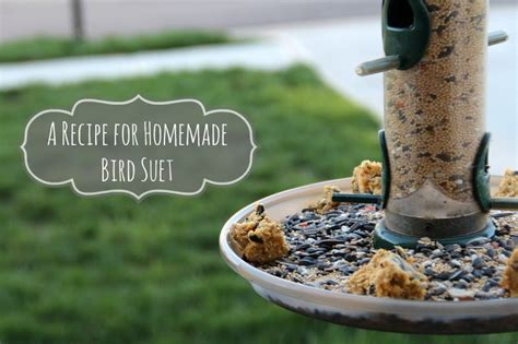 homemade bird suet hello nature