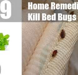 what home remedy kills bed bugs home remedies to kill bed bugs treatments cure