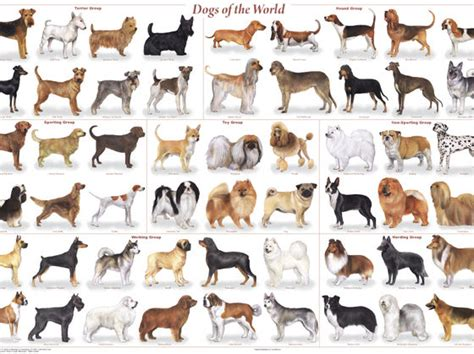 which breed are you if you were a which breed would you be playbuzz