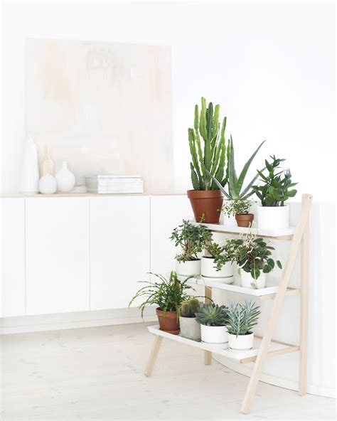 home plant decordots decorating with green plants