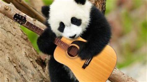 Animal Guitar animals cbbc