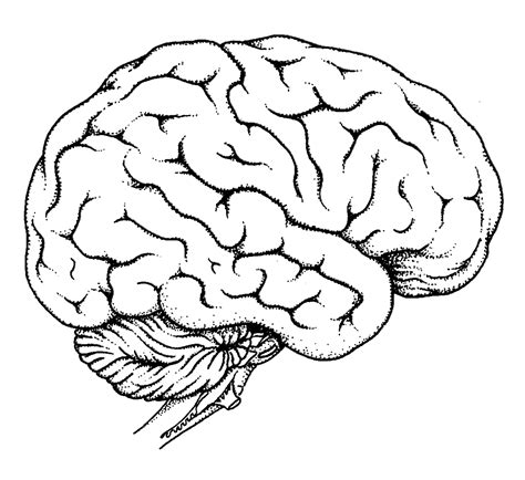 Brain Coloring Page 404 Page Not Found Error Ever Feel Like You Re In The by Brain Coloring Page