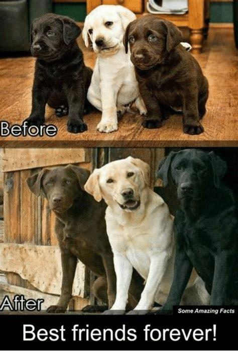 Friends Forever Meme - 25 best memes about best friends forever best friends