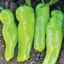 Paket Hemat 7 Jenis Cabe Pepper Unik Bisa Ditanam Di Pot bibit bunga telang