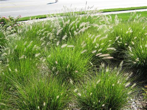 a visual guide to native nebraska landscaping
