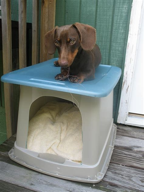 cheapest dog houses distance makes cheapest dog house on the block