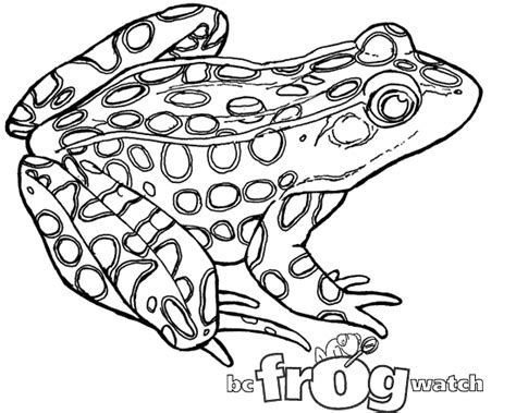 leopard frog coloring page b c frogwatch program environment province of british