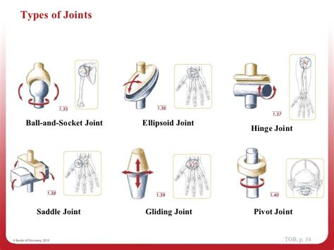 diagram of joints in the 1 navigating the diagrams week 1