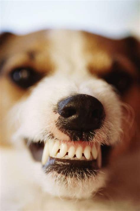 dogs  discipline     spoil