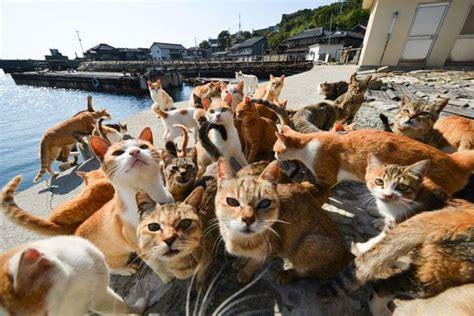 felines rule on ehime s cat island the japan times 青島 ao island the cat island ehime thousands islands
