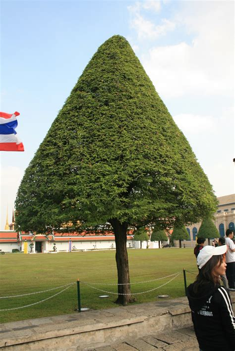 bangkok triangle tree simooonie flickr