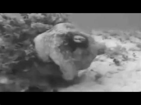 most wired mermaids caught on tape amazing footage hd