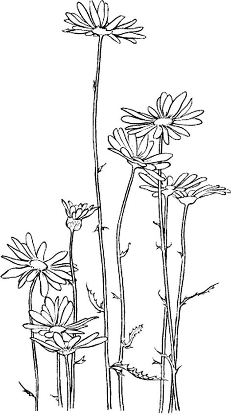 Free Coloring Pages Of Daisy Flower Garden Scout Flower Garden Coloring Pages Free