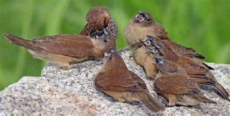 Pakan Lolohan Untuk Burung Gereja mendapatkan burung gereja liar selaras business