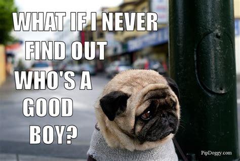 Sad Pug Meme - sad pug dog meme pugs good boy sad dog dogs