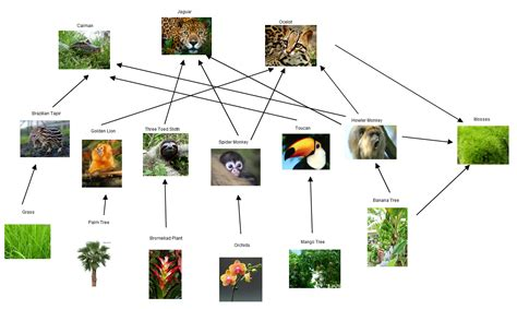 monkey food chain diagram 57 food chain forest food web the river a