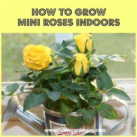 Fairy Door by How To Grow Mini Roses Indoors Home Garden Joy