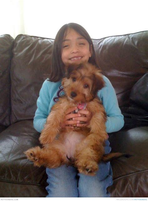 chicago dogs near me poodle puppies poodle rescue and adoption near you autos post