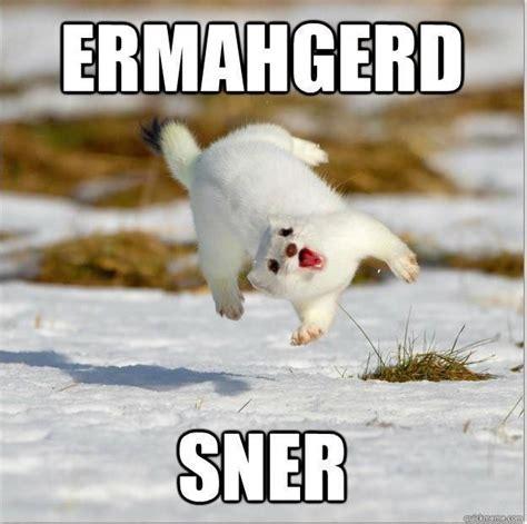 Ermahgerd Animal Memes - omg animals meme ermahgerd sner awesomeness