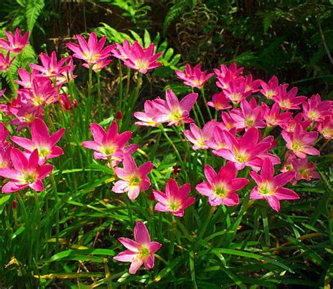 flower bulbs that bloom all summer collection on ebay