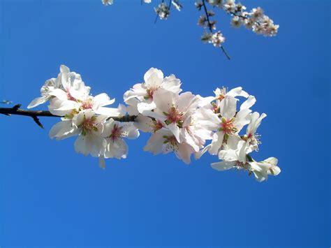 fiori di marzo fiori rosa fiori di marzo 5 fiori invernali della