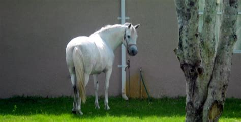 horse in backyard horse in the backyard by lamoonstar on deviantart