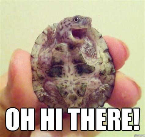 Hi Meme - oh hi there weknowmemes