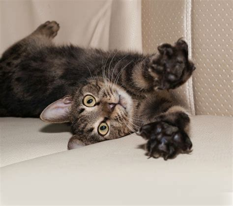 leather couch cat scratch cat scratches on leather sofa leather blog learn all about