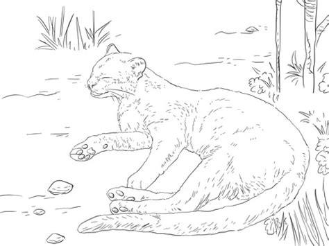 jaguarundi coloring page jaguarundi resting on a ground coloring page free