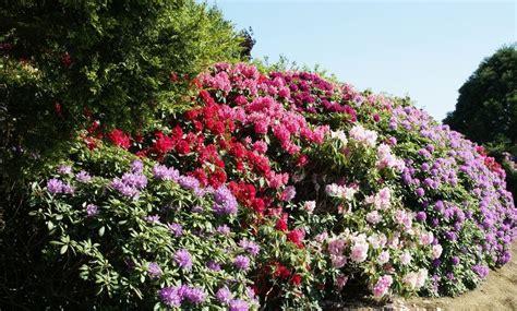 les pour plantes plante pour haie liste ooreka