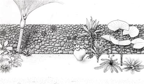 drawing of garden some drawings landscaping botany and sustainable
