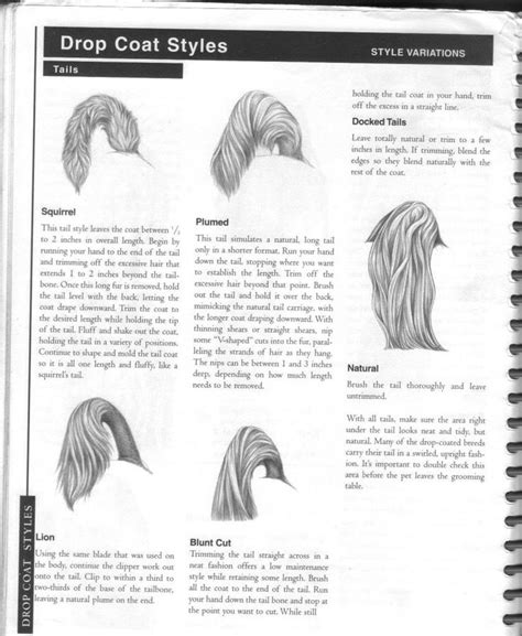 grooming guide 5 perfectly groomed celebrities 1000 images about maltese cuts on pinterest japanese