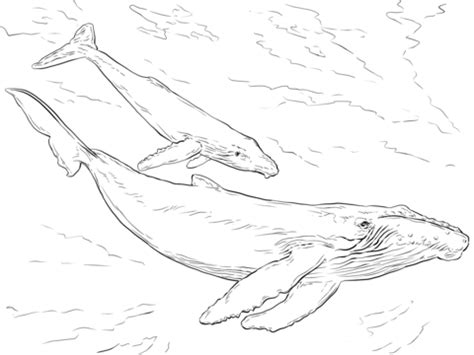 humpback whales coloring page free printable coloring pages