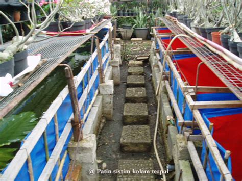 Jual Kolam Terpal Untuk Budidaya Ikan Konsumsi budidaya dan pembibitan ikan patin pasopati