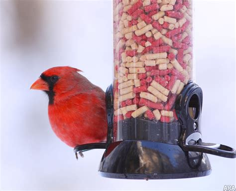 secrets of suet why serving up suet helps birds weather