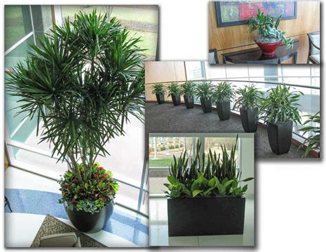 live indoor plants emejing live indoor plants gallery interior design ideas
