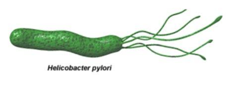 test helicobacter feci civico20 news gastrite e gastropatia una patologia