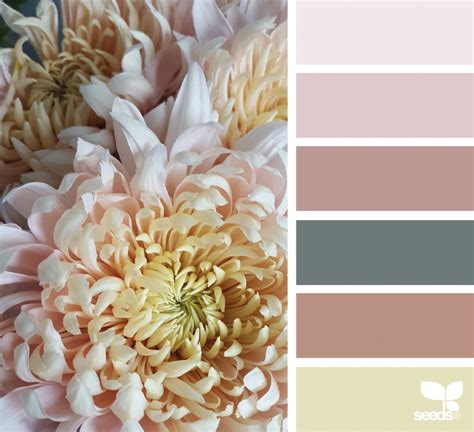 design seeds instagram flora hues design seeds
