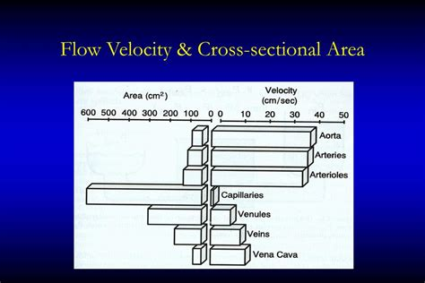 difference between area and cross sectional area ppt oxygen transport powerpoint presentation id 729688