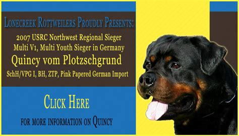 rottweiler breed council german rottweiler puppies houston tx photo