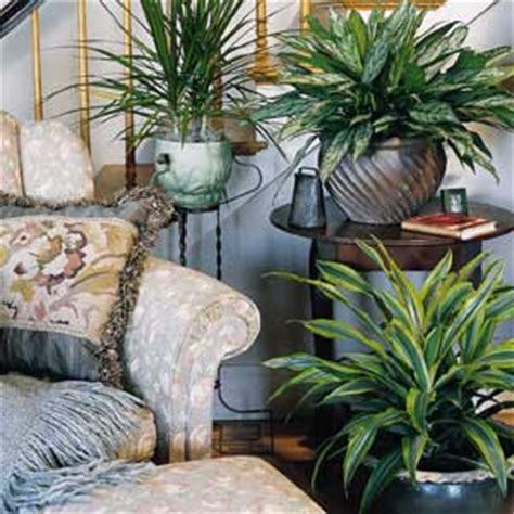 plant decorations home house of furniture decor your home with natural indoor