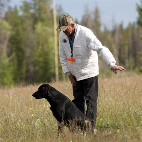 golden retriever club of bc mighty earns his working title tnt kennels