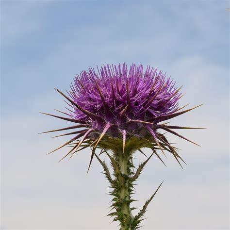 fiore botanica immagini natura fiorire fiore viola fioritura